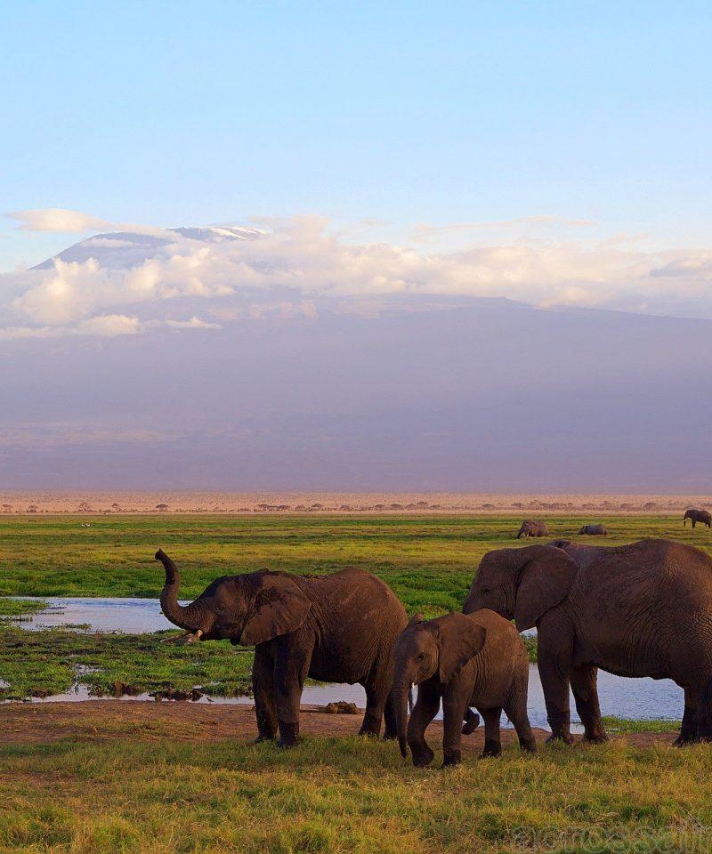 Trip to Amboseli