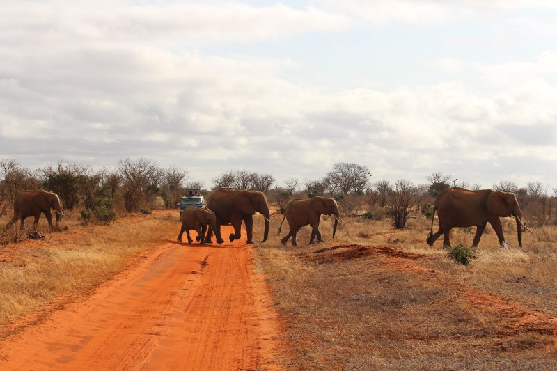 attractions in Tsavo,Kenya