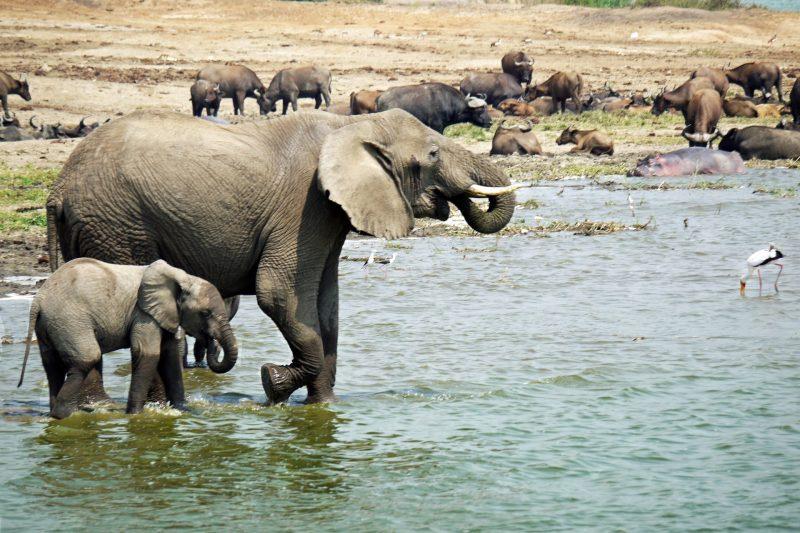 Primates Safaris